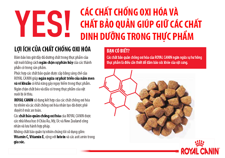 chat-dinh-duong-cho-cho-meo