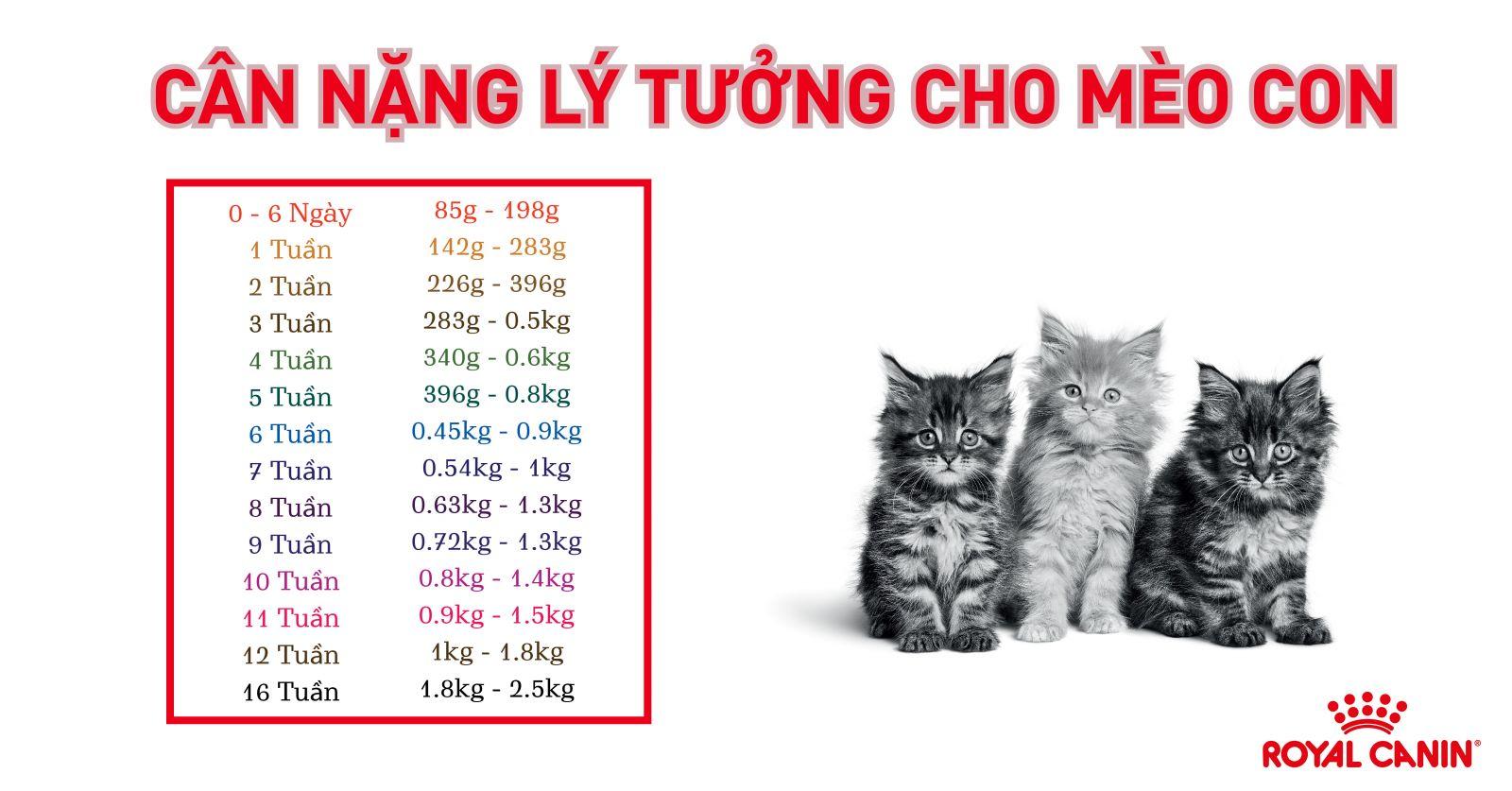 can-nang-ly-tuong-cho-meo-con