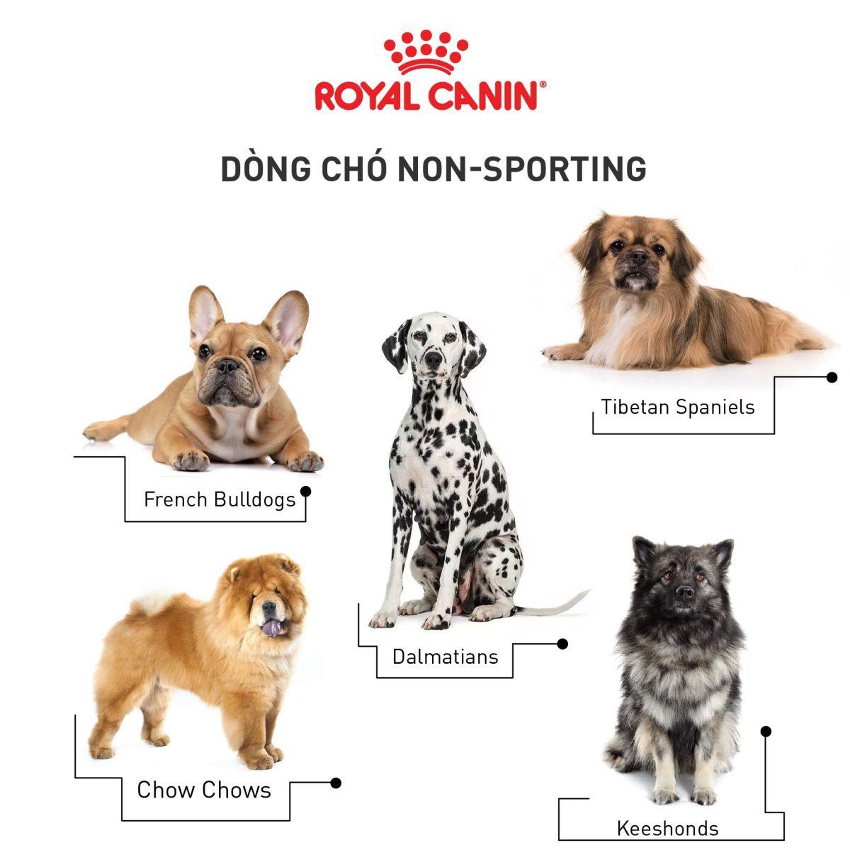 cho-Non-Sporting